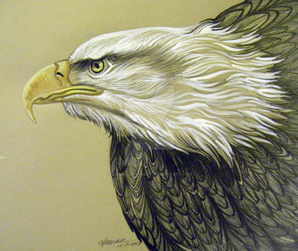 Eagle Art by edroeder on DeviantArt