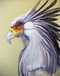 Secretary Bird 2
