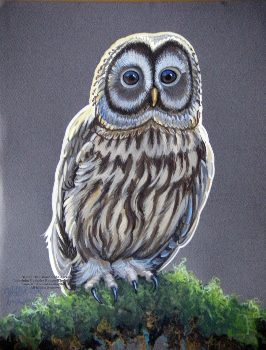 This is a graphic of Shocking Barred Owl Drawing