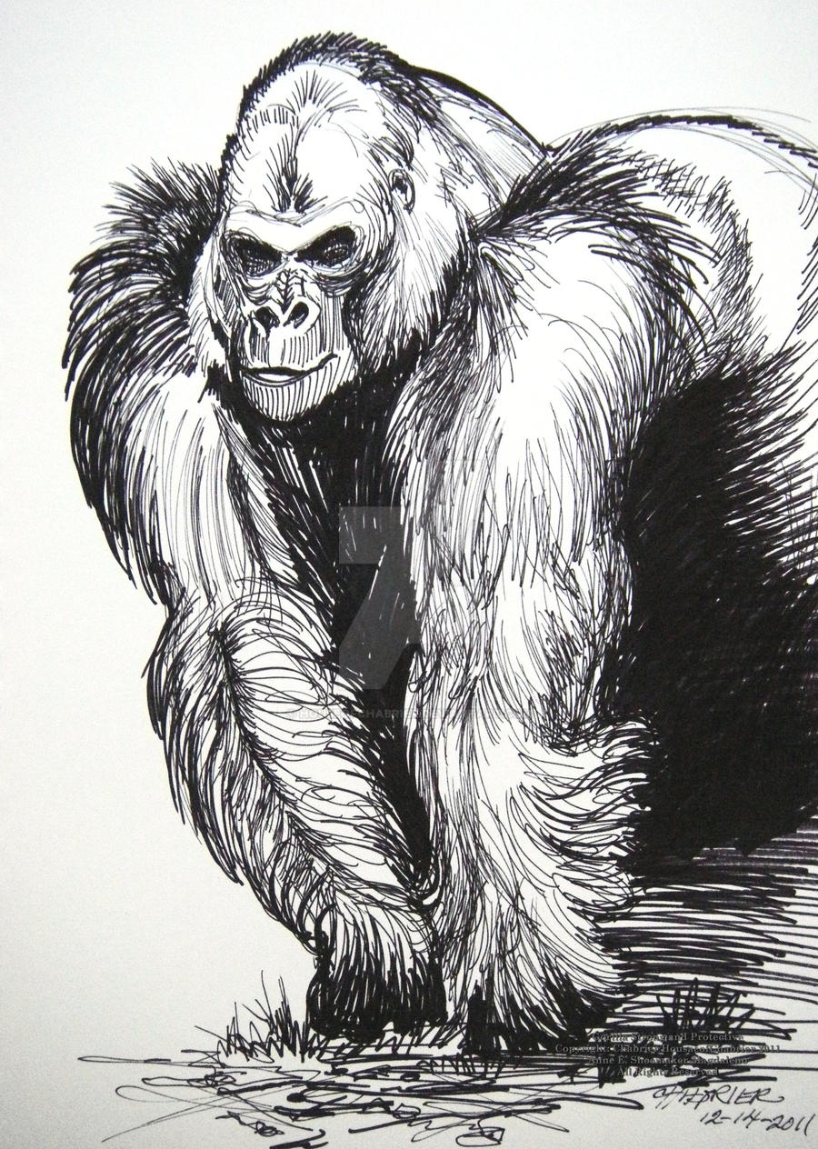 Uncategorized Gorilla Drawings gorilla strong and protective by houseofchabrier on deviantart houseofchabrier