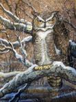 Great Horned Owl Not Again?