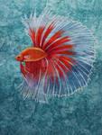 Beta Fish 1