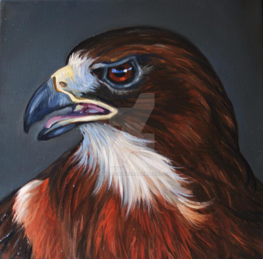 Swainson's Hawk by HouseofChabrier