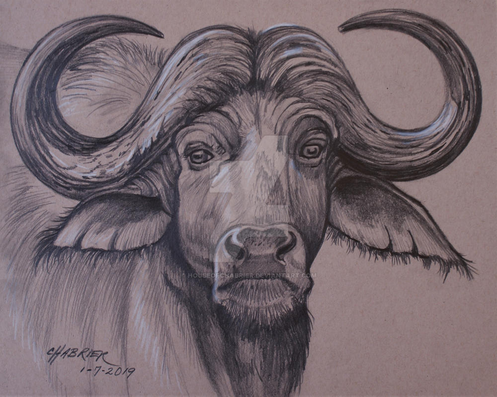 African Cape Buffalo  by HouseofChabrier
