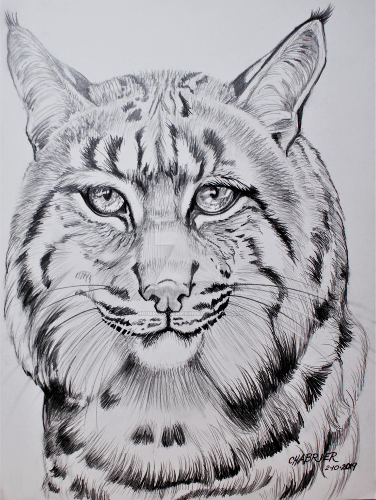 Wanoka The Elegant Bob Cat  by HouseofChabrier