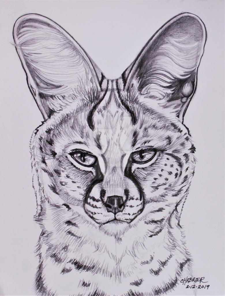 Serval  by HouseofChabrier