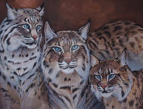Turpentine Creek Bob Cats