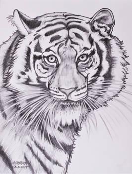 Whitney The Terrific Tiger