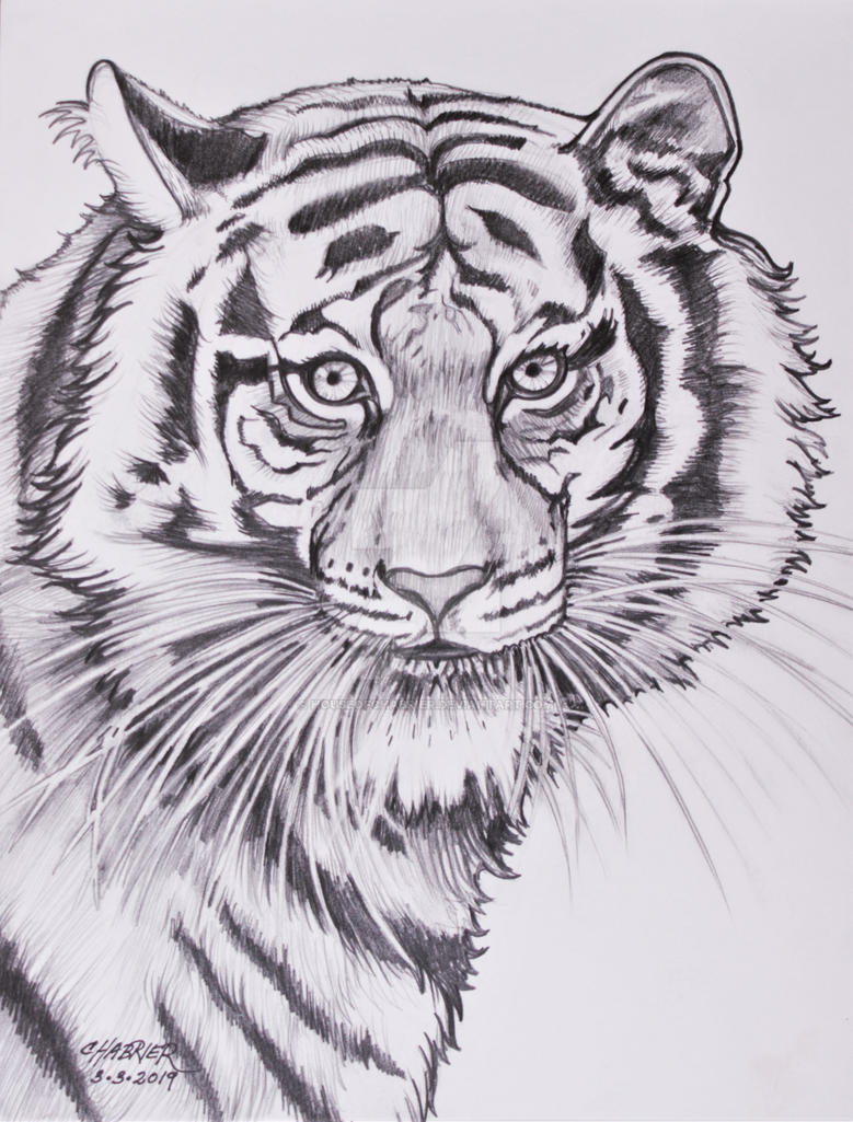 Whitney The Terrific Tiger  by HouseofChabrier