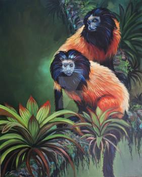2 Black Faced Lion Tamarin