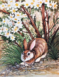 Cliff Rose Cottontail 3