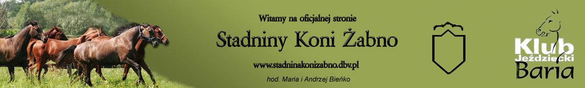 Oficjalna Strona Stadniny Koni �abno.