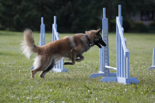 Agility first timer