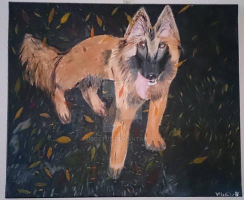 Belgian Shepherd Tervueren Painting