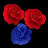 Three Roses by NiennaAlatariel