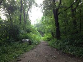 Hamilton Park morning walk