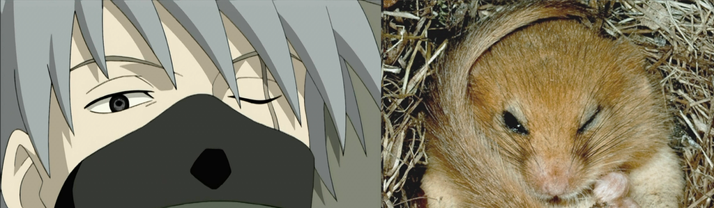 Kakashi-dormouse by cfs3creative