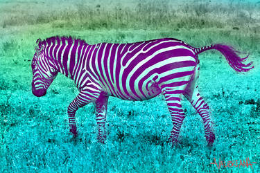 Zebra by MCValerianA