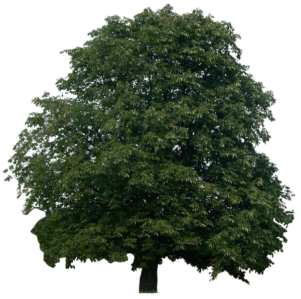 tree 10 png by gd08