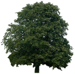 tree 10 png
