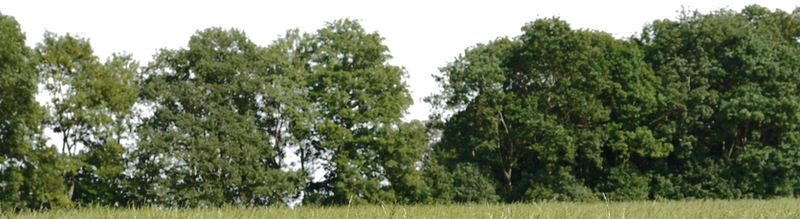 tree for background png