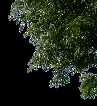 tree corner 1 png