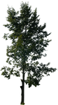 tree 14 png