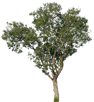 tree 17 png by gd08