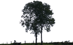 tree 23 png