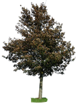 tree 26 png