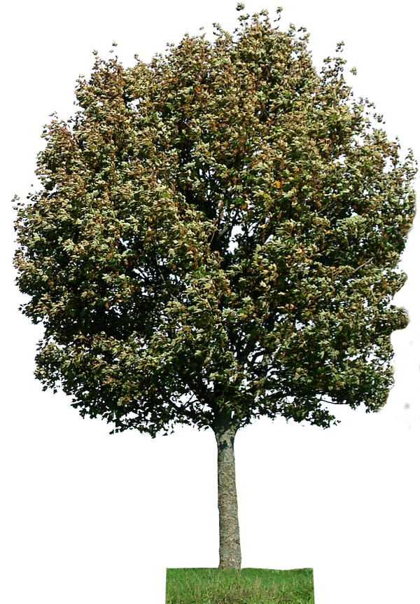 tree 28 png by gd08 on DeviantArt