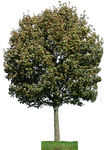 tree 28 png