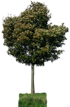 tree 29 png