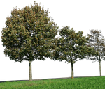 tree 32 png