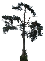 tree 37 png by gd08