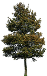 tree 39 png