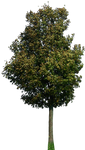 tree 42 png