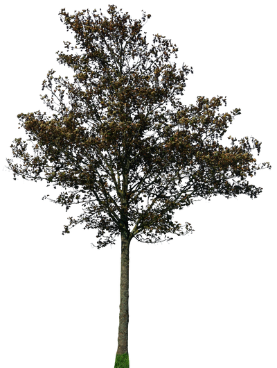 tree 43 png by gd08 on DeviantArt