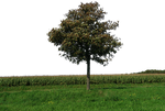tree and grass 46 png