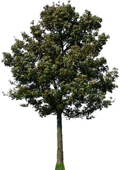 tree 47 png