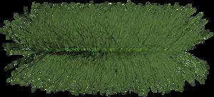 grass_01 png
