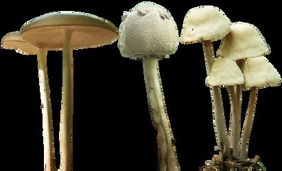 mushroom 12 13 14 png by gd08