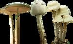 mushroom 12 13 14 png