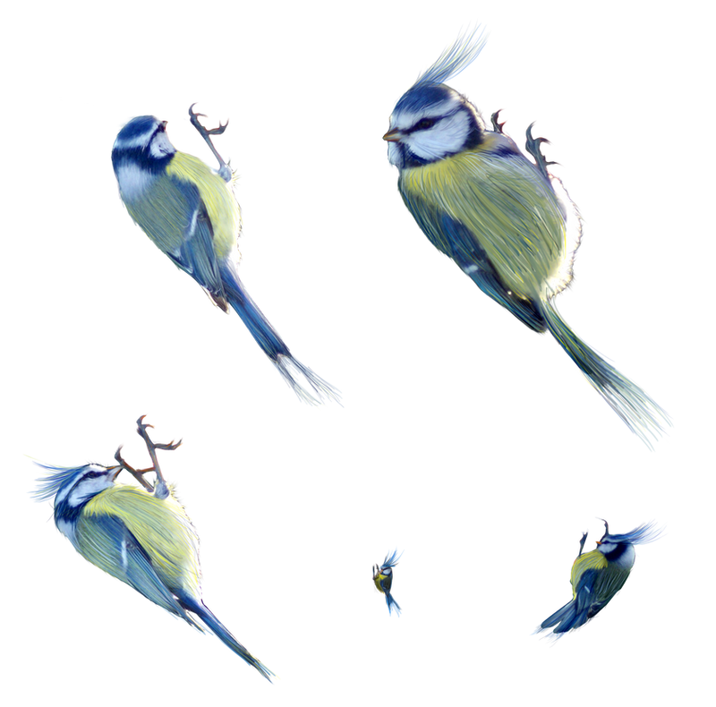 little birds for details png by gd08