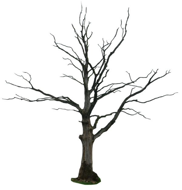 Dead Tree Png By Gd08 ...