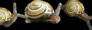 snails png