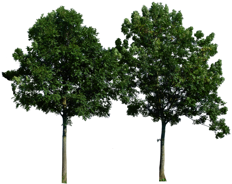 Tree 49 png by gd08 on DeviantArt