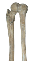 Bones png