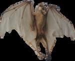 Bat skeleton png