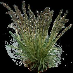 Grass 02 png